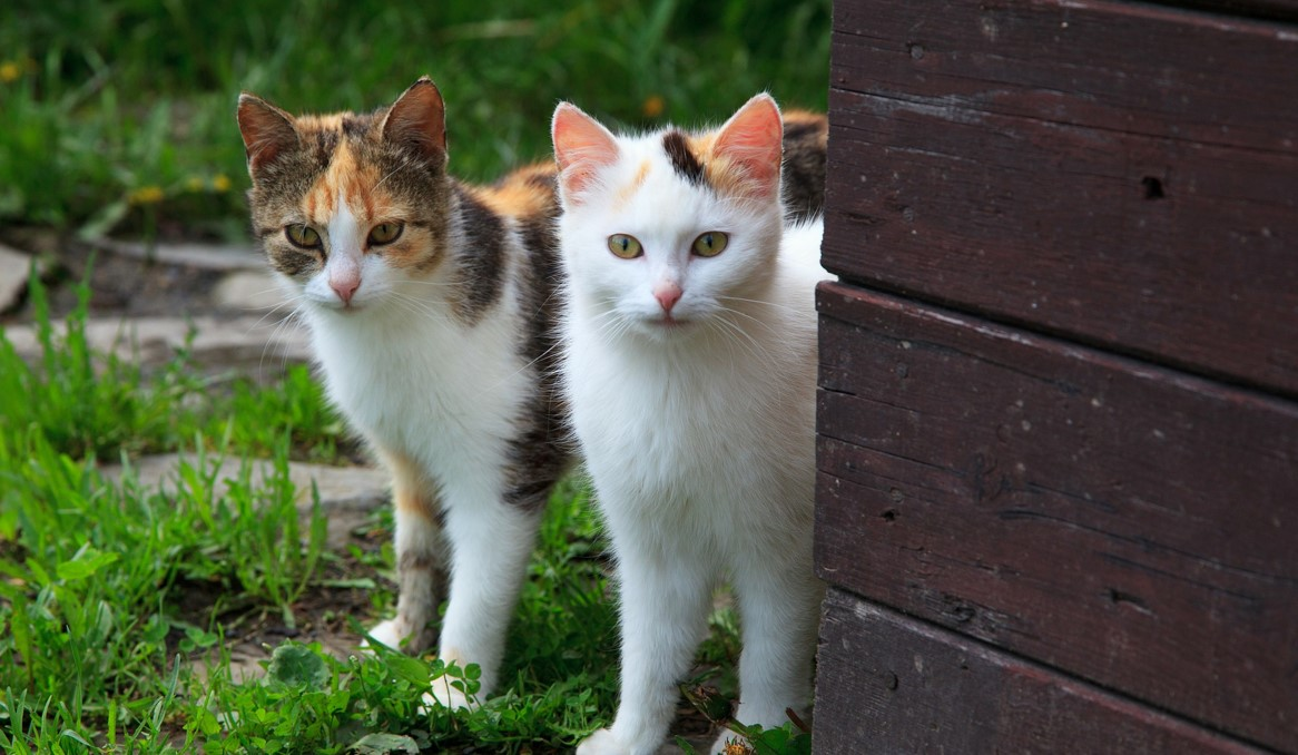 Cats in puberty: When kittens become adults