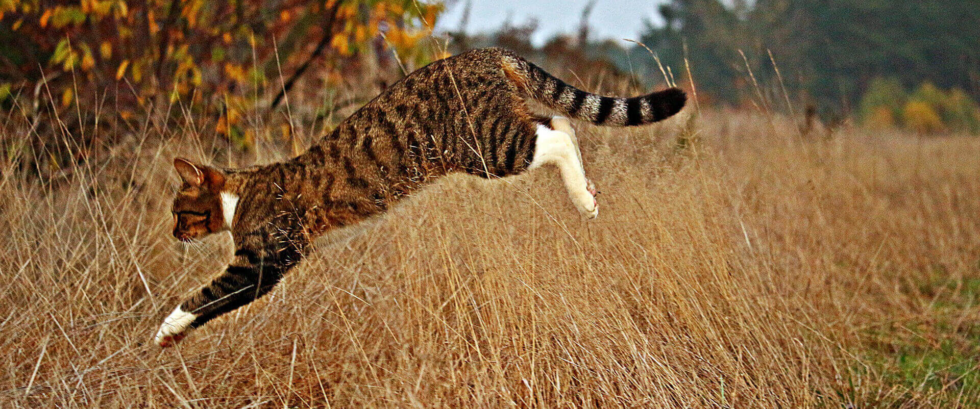 Soft cat landing: Do cats always land on their paws?