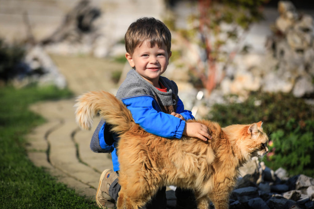 Child and animal - child with a cat